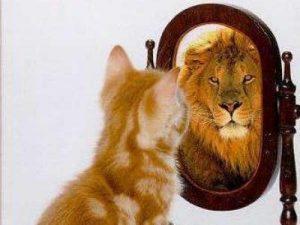 kat en leeuw